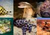 10 อันดับ สัตว์ที่มีพิษร้ายแรงที่สุดในโลก